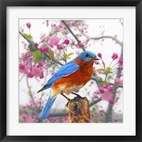 Framed Spring Bird 6NV