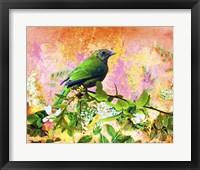 Framed Bird Collection 17