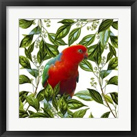 Framed Bird Collection 18