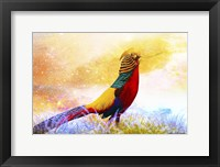 Framed Bird Collection 20