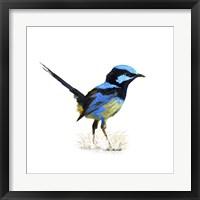 Framed Bird Collection 21