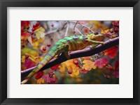 Framed Chameleons