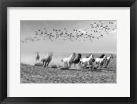 Framed Wild Horses 2M