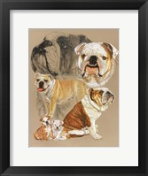 Framed English Bulldog