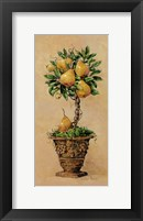 Framed Potted Pears