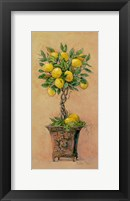Framed Potted Lemons