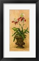 Framed Orchid Revival II