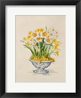 Framed Blue and White Porcelain Daffodils
