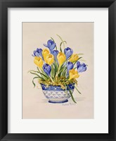 Framed Blue and White Porcelain Crocus