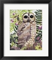 Framed Spotted Owl