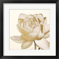 Framed Vintage Lotus Cream II