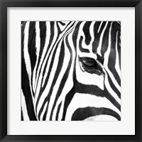 Framed Zebra Up Close