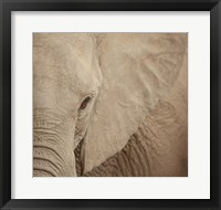 Framed Elephant Up Close