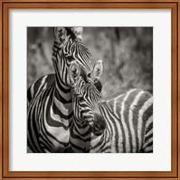 Framed Zebra Pair