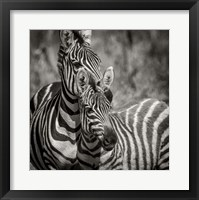Framed Zebra Pair