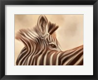 Framed Zebra Looking Over Shoulder