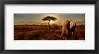 Framed Elephant and Tree