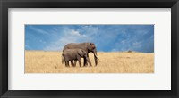 Framed Elephant and her Calf