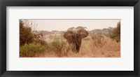 Framed Elephant in the Savannah