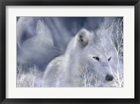 Framed White Wolf