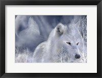 Framed White Wolf