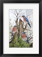 Framed Bluebird Morning