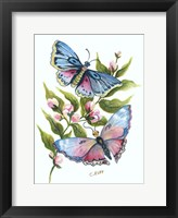 Framed Butterfly in Pink and Blue
