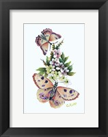 Framed Butterfly in Pink