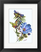 Framed Butterfly on Blue Poppy