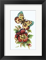 Framed Butterfly on Red Pansey