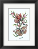 Framed Butterfly with Starflower