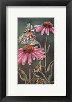 Framed Coneflower with Butterfly