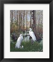 Framed Snowy White Egret Nesting