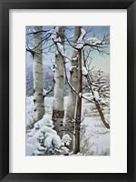 Framed Winter Snow with Aspen
