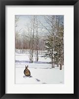 Framed Winter Rabbit