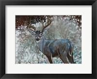 Framed Deer I