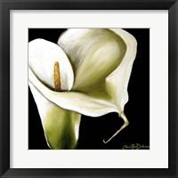 Framed Arum Lily Ii