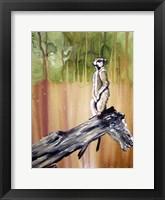 Framed Meerkat