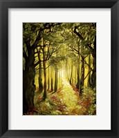 Framed Sunlit Forest Path