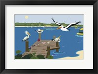 Framed Where The Pelicans Gather