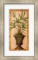 Framed Majestic Palm