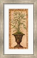 Framed Regal Palm