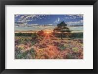 Framed Heathland Sunset