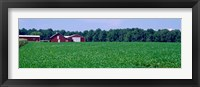 Framed Green Field with Barn, Maryland