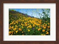 Framed California Poppies and Canterbury Bells in a Field, Diamond Valley Lake, California
