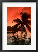 Framed Palm Trees at Sunset, Moorea, Tahiti, French Polynesia