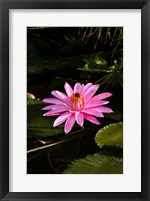 Framed Close-up of Water Lily Flower in a Pond, Tahiti, French Polynesia