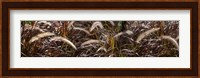 Framed Close-up of Ornamental Grass