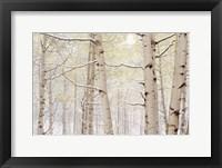 Framed Autumn Aspens With Snow, Colorado