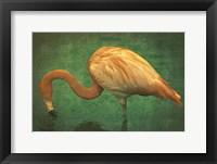 Framed Caribbean Flamingo